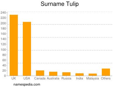 Surname Tulip