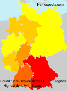 Familiennamen Muscolino - Germany