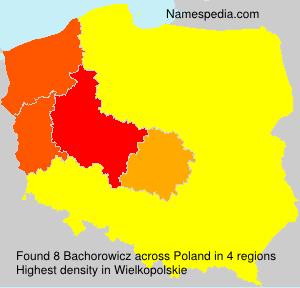 Bachorowicz