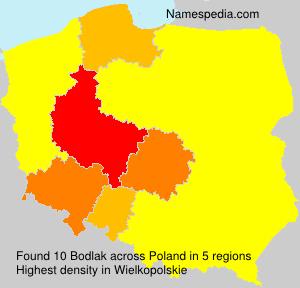 Bodlak