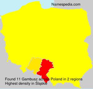 Gambusz