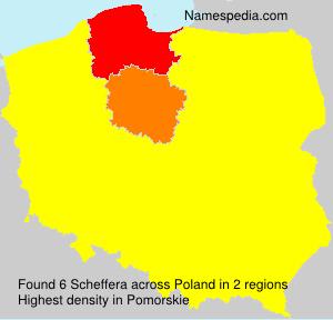 Scheffera